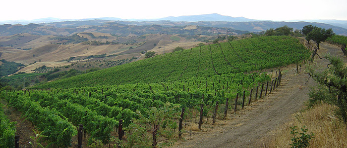 Montecucco vineyards Colle Castagno