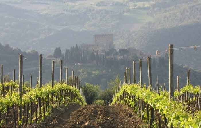Wines in the Val d'Orcia