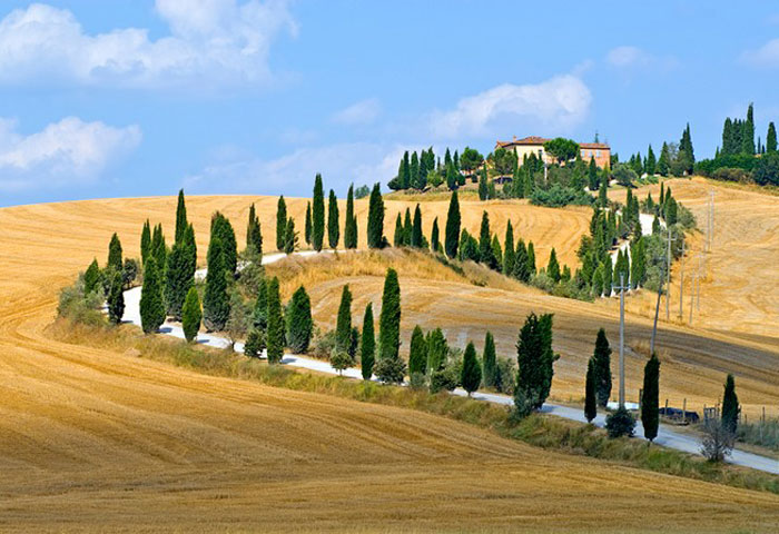 The cypresses that twine up a hill side in front of Villa La Foce, near Chianciano Terme